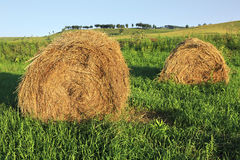 Beautiful haystacks on green lawn Stock Images