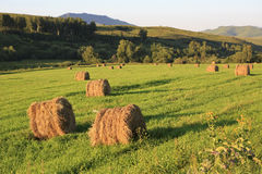 Beautiful haystacks on green lawn in the mountains Royalty Free Stock Image