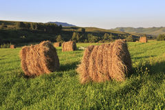 Beautiful haystacks on green lawn in the mountains Royalty Free Stock Photo
