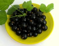 Beautiful and healthy blackcurrant with green leaves Stock Images