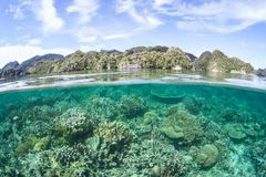 Beautiful and Healthy Coral Reef in Raja Ampat royalty free stock image