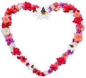 Beautiful heart made of different flowers on white background. Beautiful heart made of different flowers as a symbol of love on white background. Heart consists Stock Photography
