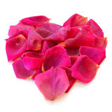 Beautiful heart of pink rose petals . Royalty Free Stock Photos