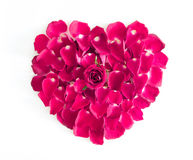 Beautiful heart of pink rose petals. On white backgronud Stock Image