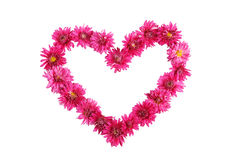 Beautiful heart with purple chrysanthemums isolated on white. Royalty Free Stock Photo