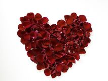 beautiful heart of red rose petals on white stock photos