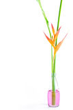 Beautiful Heliconia flower blooming Royalty Free Stock Images