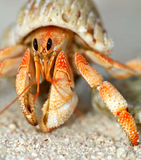 Beautiful hermit crab in his shell close up. On sand background Stock Images