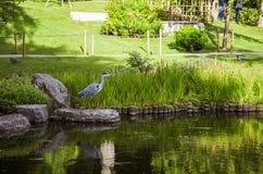A beautiful heron standing near pond Stock Photo