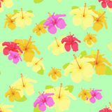 Beautiful hibiscus flower on green. vector illustration seamless. Background Stock Photo