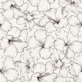 Beautiful hibiscus pattern Stock Image