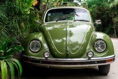 Green beatles car behind jungle royalty free stock image