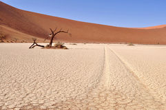 Beautiful Hidden Vlei in desert Namib Royalty Free Stock Photography