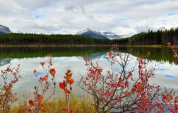 Beautiful high mountains of the Canadian Rockies reflecting in an alpine lake along the Icefields Parkway between Banff and Jasper. During foliage season with Royalty Free Stock Photography