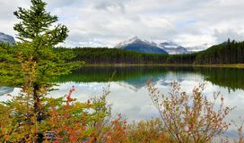 Beautiful high mountains of the Canadian Rockies reflecting in an alpine lake along the Icefields Parkway between Banff and Jasper. During foliage season with Royalty Free Stock Images