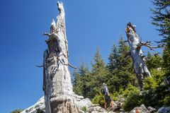 Hiker on lycian way Royalty Free Stock Image