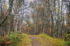 A beautiful hiking path through an autumn forest in Norway. Fall scenery in forest. Beautiful autumn landscape Royalty Free Stock Photo