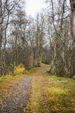 A beautiful hiking path through an autumn forest in Norway. Fall scenery in forest. Stock Image