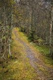 A beautiful hiking path through an autumn forest in Norway. Fall scenery in forest. Royalty Free Stock Photos