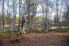 A beautiful hiking path through an autumn forest in Norway. Fall scenery in forest. Beautiful autumn landscape Royalty Free Stock Image