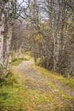 A beautiful hiking path through an autumn forest in Norway. Fall scenery in forest. Royalty Free Stock Photography