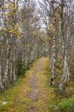 A beautiful hiking path through an autumn forest in Norway. Fall scenery in forest. Stock Images