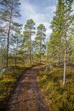 A beautiful hiking path through an autumn forest in Norway. Fall scenery in forest. Stock Photography