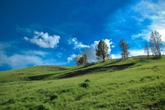 The beautiful hill at Yellowstone. The view of beautiful hill at Yellowstone national park Royalty Free Stock Photos