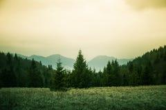A beautiful hillside scenery of Tatra mountains. Stock Images