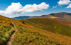 Beautiful hilly landscape of Carpathian mountains. Lovely scenery in late summer. blue sky with some fluffy clouds Stock Photos