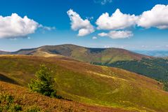 Beautiful hilly landscape of Carpathian mountains. Lovely scenery in late summer. blue sky with some fluffy clouds stock photo