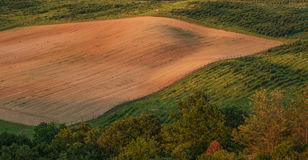 Beautiful hilly landscape, field - top view royalty free stock image