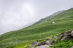 Beautiful Himachal. A beautiful landscape in Himachal Pradesh Royalty Free Stock Photography