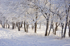 Beautiful hoarfrost Stock Photography