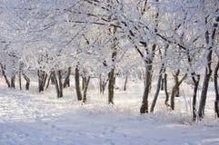 Beautiful hoarfrost Stock Photography