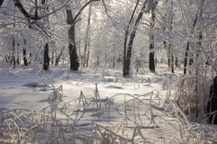 Beautiful hoarfrost Royalty Free Stock Images