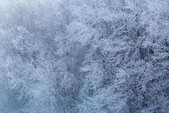 Beautiful hoarfrost and rime on trees Royalty Free Stock Photo