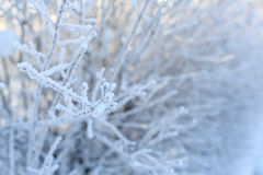 Beautiful hoarfrost and rime on trees Royalty Free Stock Photos