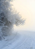 Beautiful hoarfrost and rime on trees Stock Photography