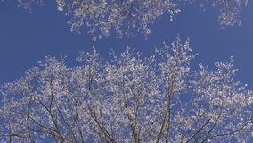 Beautiful hoarfrost on winter tree. Branch stock video