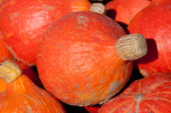 Beautiful Hokkaido pumpkins Royalty Free Stock Photo