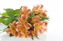 Beautiful holiday flowers Stock Images
