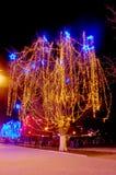 Beautiful holiday illumination. New Year decorated tree in a park. Beautiful holiday illumination Royalty Free Stock Photo