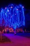 Beautiful holiday illumination. New Year decorated tree in a park. Beautiful holiday illumination Stock Photography