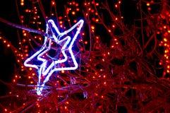 Beautiful holiday illumination. New Year decorated tree in a park. Beautiful holiday illumination close up Stock Image