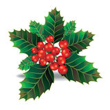 Beautiful holly christmas branch and berry. Stock Images
