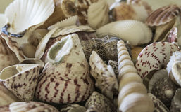 Beautiful home decor empty seashells Stock Images