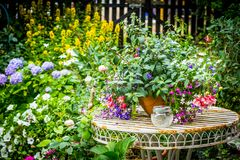 Beautiful home garden with lots of blooming flowers, plants and garden table. Beautiful home garden with lots of blooming flowers, , fuchsia, lobelia, plants and stock photography