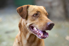 Beautiful homeless mongrel dog Stock Photography