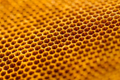 Beautiful honeycomb without honey texture Stock Image